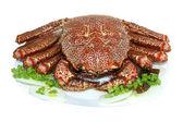 Gekochte schmackhafte krabbe auf einem teller — Stockfoto