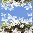 Pretty white flowers frame with space for text — Stock Photo
