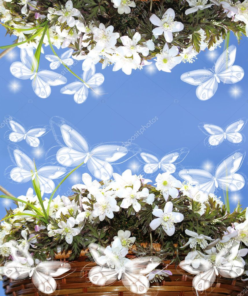 Pretty frame from white  flowers on blue back. — Stock Photo #10538514