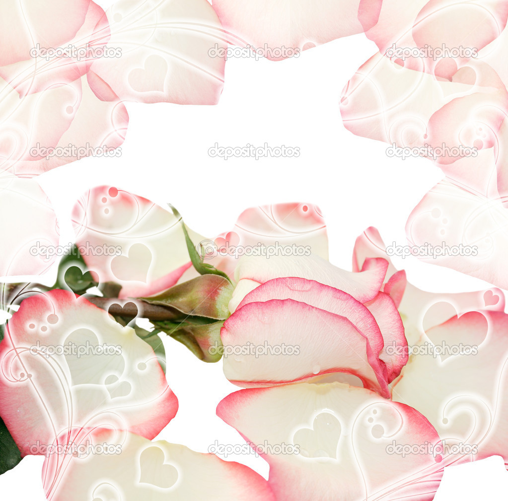 Valentines design with rose and petals. Roses — Stock Photo #10698637