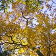 Autumn leaves — Stock Photo #8033421