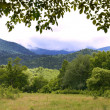 Alpine meadow - Foto Stock