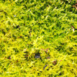 Autumn moss -  