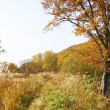 Autumn scenery - Foto Stock