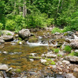 Beautiful spring stream — Stock Photo