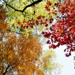 Colorful autumn  leafs with sky — Stock Photo