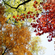 Colorful autumn  leafs with sky — Foto Stock