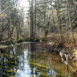 Forest river — Stockfoto