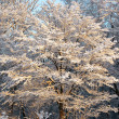 Winter fairy tale - Stockfoto