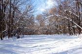 Vintern avenue — Stockfoto