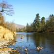 podzimní říční krajina 2 — Stock fotografie