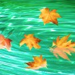 Autumn whirlpool — Stock Photo