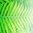 Forest fern back — Foto de Stock