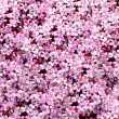 Spring flower avalanche — Stock Photo