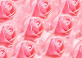 Abstract pink roses back — Stock Photo