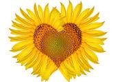 Abstract sunflower heart — Stock Photo