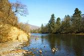 Autumn river scenery 2 — Stock Photo