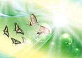 Butterflies dream fantasy — Stock Photo