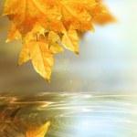 Autumn fantasy — Stock Photo