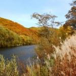 podzim na řece — Stock fotografie