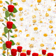 Isolated red roses and chamomiles — Stockfoto
