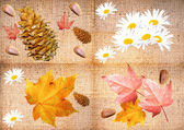 Autumn collage 2 — Stockfoto