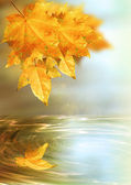 Autumn fantasy — Stock Photo