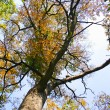 Autumn tree — Stock Photo #9171784