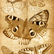 Stock Photo: Grunge canvas back with butterflies
