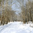 Beautiful winter avenue — Foto de Stock