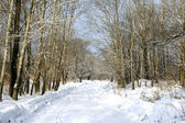 Beautiful winter avenue — Stock Photo
