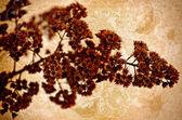 Old flourish back pattern — Foto Stock