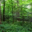 Summer Forest — Stockfoto