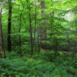 Summer Forest - Foto Stock