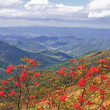 Blue Ridge Mountains — Stock Photo #8061797