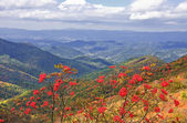 Blue ridge mountains — Photo