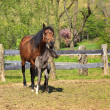 ������, ������: Horse and Colt