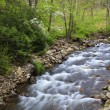 Creek in the Spring - Stockfoto