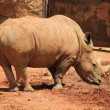 Stock Photo: Muddy Rhino