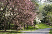 Spring Driveway — Stock Photo