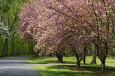 Spring Driveway with Fence — Stock Photo