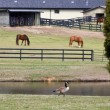 Horse Farm — Stock Photo #8483310