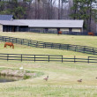 Horse Farm — Stock Photo #8483495