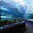 Aquarium Tunnel — Stock Photo #8498479