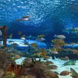 Aquarium Fish — Stock Photo #8500314