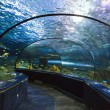 Aquarium Tunnel — Stock Photo #8500558