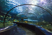 Aquarium Tunnel — Stock Photo