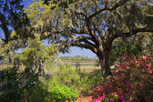 Jižní Karolína v květu — Stock fotografie