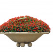 Stock Photo: Potted flowers