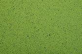 Green duckweed — Stock Photo